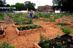 Peterson Garden Raised Beds