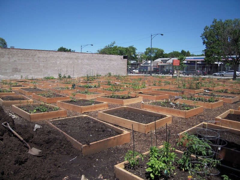 peterson-garden-project-2